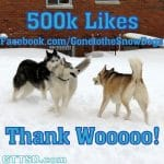 We just hit 500k likes on Facebook!