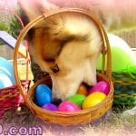 My Dogs EASTER EGG Hunting!