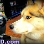 Camera Giveaway! Win a Dropcam