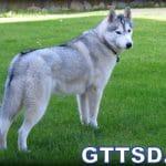 Help Potty Training a Puppy? Fan Friday 155