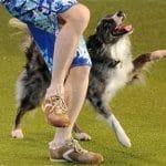 AMAZING DANCING DOG at Crufts!