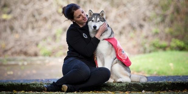 Service Husky Dog