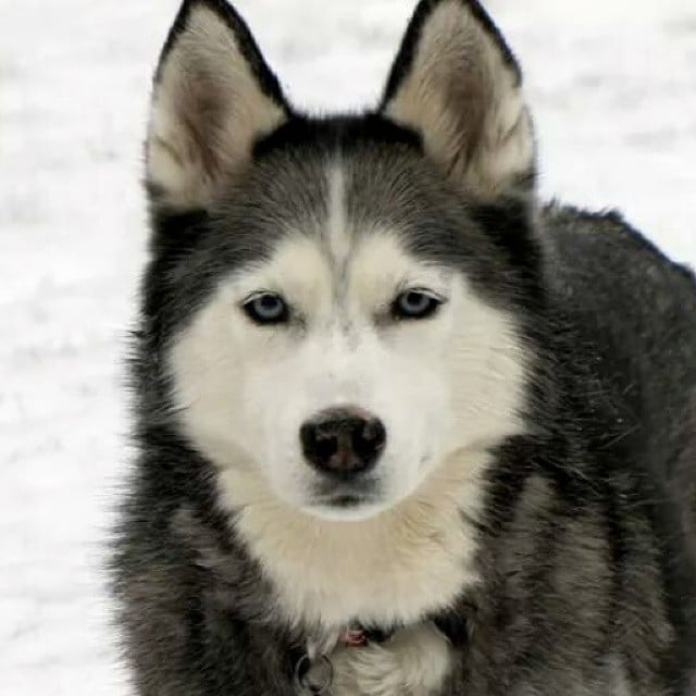 Shiloh would have turned 13 years old...