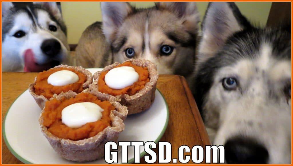 Pumpkin Pie for Dogs