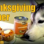 Thanksgiving Dinner for DOGS | Happy Thanksgiving!