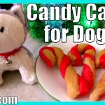 Candy Cane Cookies for Dogs | Christmas Treats Recipe