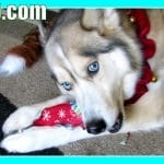 Dogs Opening Christmas Presents – Santa Paws Came! Puppy Christmas
