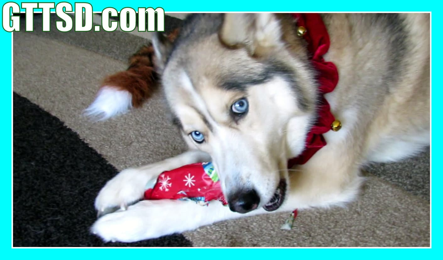 Dog opens gifts