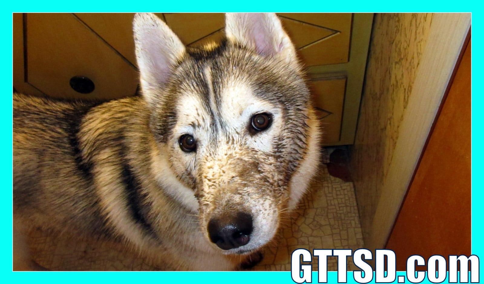 Bad Dog Muddy Puppy