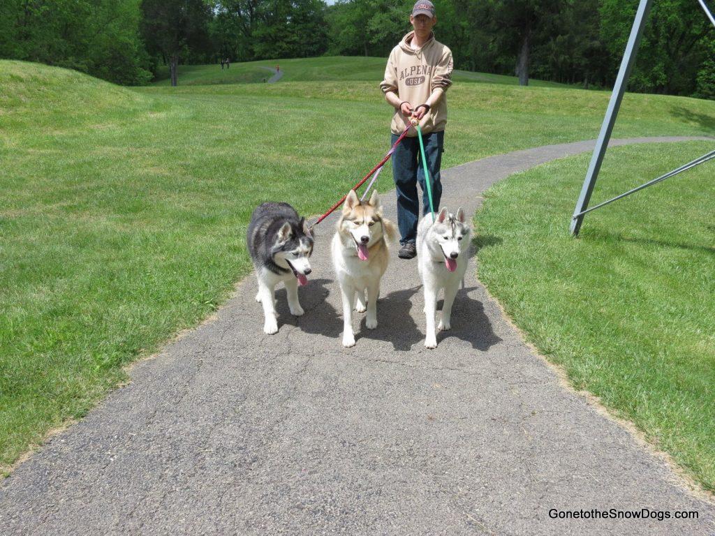 Hiking with the Huskies
