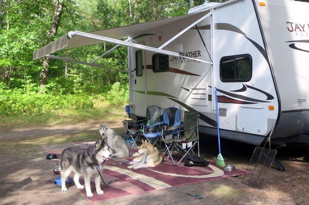 Huskies at Camp