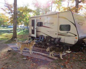 Camping Huskies