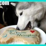 EASY HOMEMADE DOG BIRTHDAY CAKE