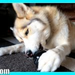 DINNER IN A KONG Stuff'N Recipes | Homemade Dog Treats