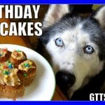 BIRTHDAY CUPCAKES for the DOG Homemade How to Dog Birthday Pupcakes Recipe