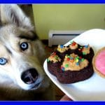 STRAWBERRY DOG ICE CREAM AND PUPCAKES DIY