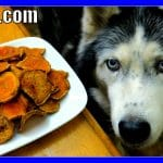 DIY SWEET POTATO DOG TREATS | Gluten Free Dog Treats