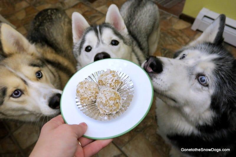 SnowBall Dog Treats DIY