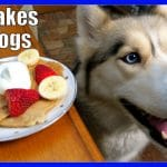 PANCAKES DOG TREAT DIY How to make Pancakes for Dogs