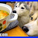 CHICKEN SOUP FOR DOGS DIY How to make Chicken Soup for Dogs