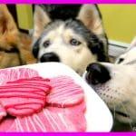 VALENTINE'S DOG TREATS DIY | Valentine's Day Dog Cookies