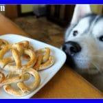 PRETZELS FOR DOGS DIY Dog Treats | Pretzel Dog Cookies