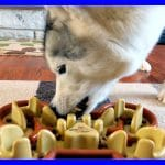 DOES YOUR DOG EAT TOO FAST | GUZZLE MUZZLE GIVEAWAY