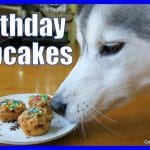 HOW TO MAKE DOG BIRTHDAY PUPCAKES | DIY Cupcakes for Dogs | Easy Recipe