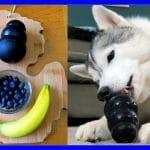 DIY DOG TREATS FROZEN FRUIT SALAD KONGS