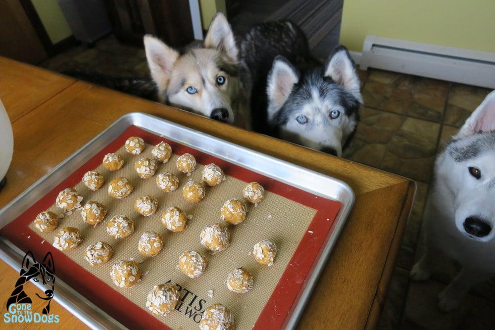 No Bake Dog Cookies