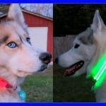 MAKE YOUR DOGS SAFER AT NIGHT
