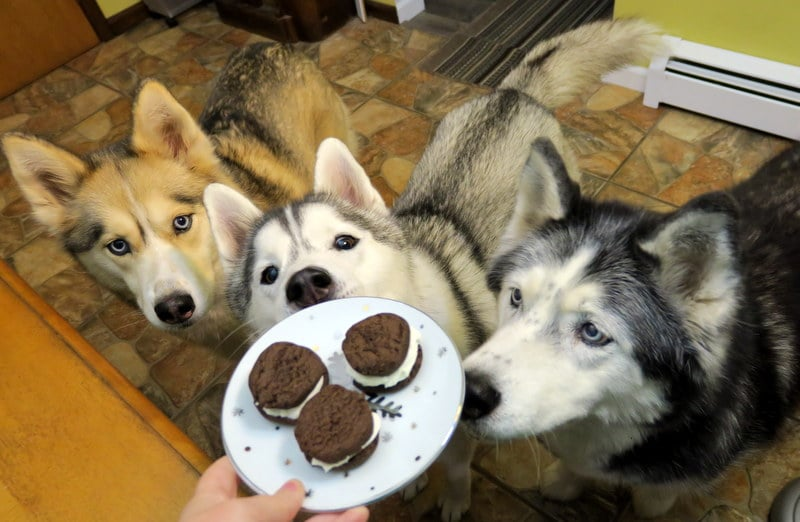 Oreo Cookies for Dogs
