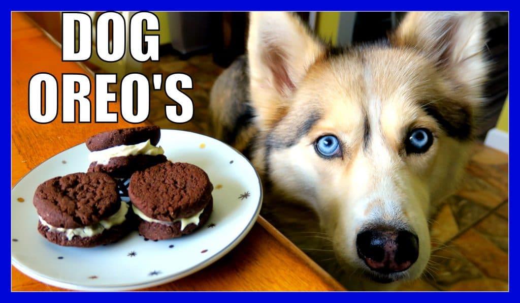 Dog Oreos