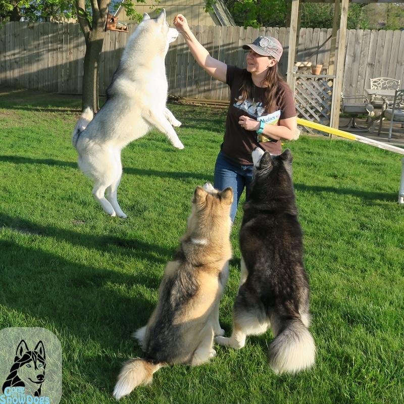 Nudges Dog Treats #NudgeThemBack