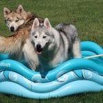 INFLATABLE DOG POOL GIVEAWAY