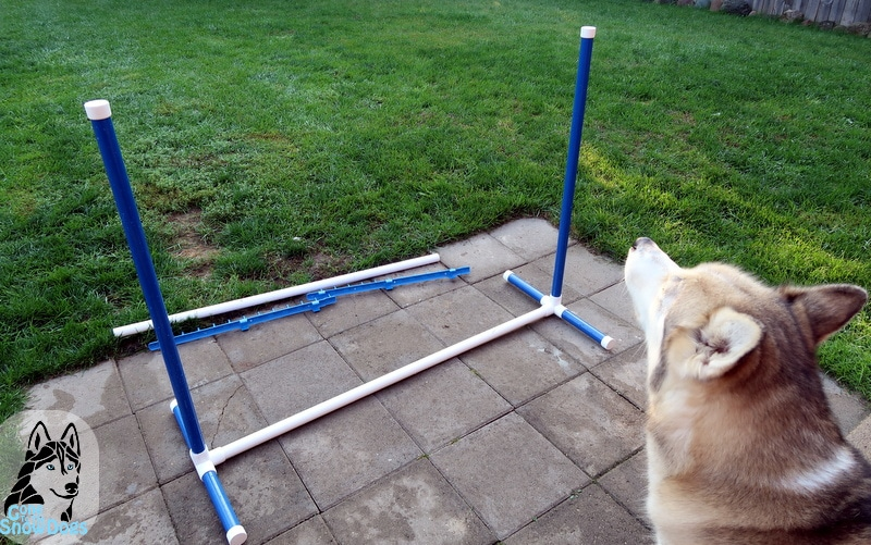 BIY Build your own Agility Jumps