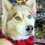 Day 11 $100 Petco Gift Card #12DaysofGiveaways