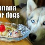 DIY BANANA SPLIT FOR DOGS | DIY Dog Treats