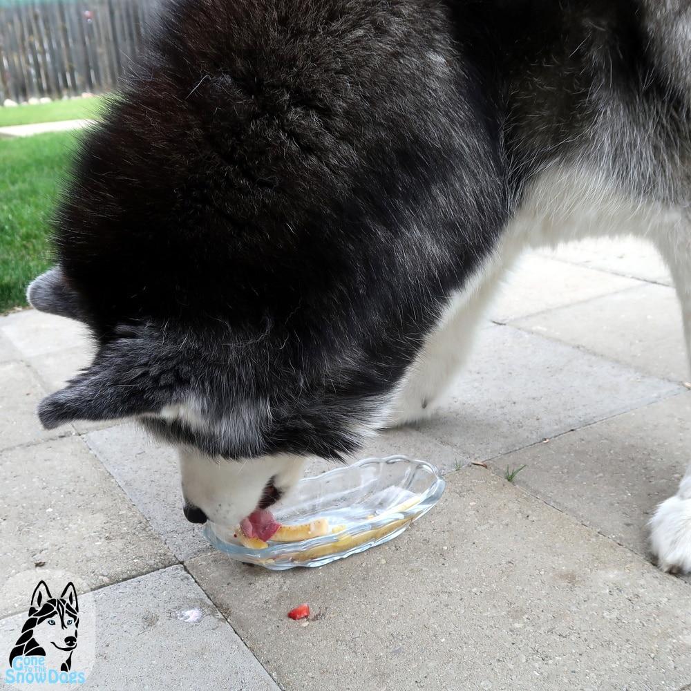 DIY banana split for dogs