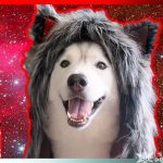 Red Galaxy Night Fox Spirithood Giveaway