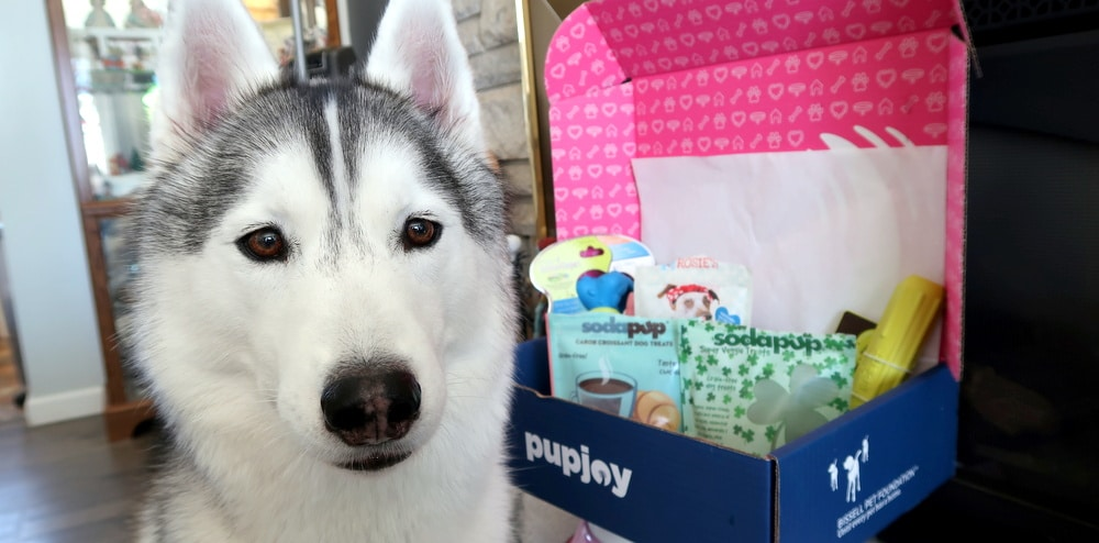 Pupjoy unboxing and review