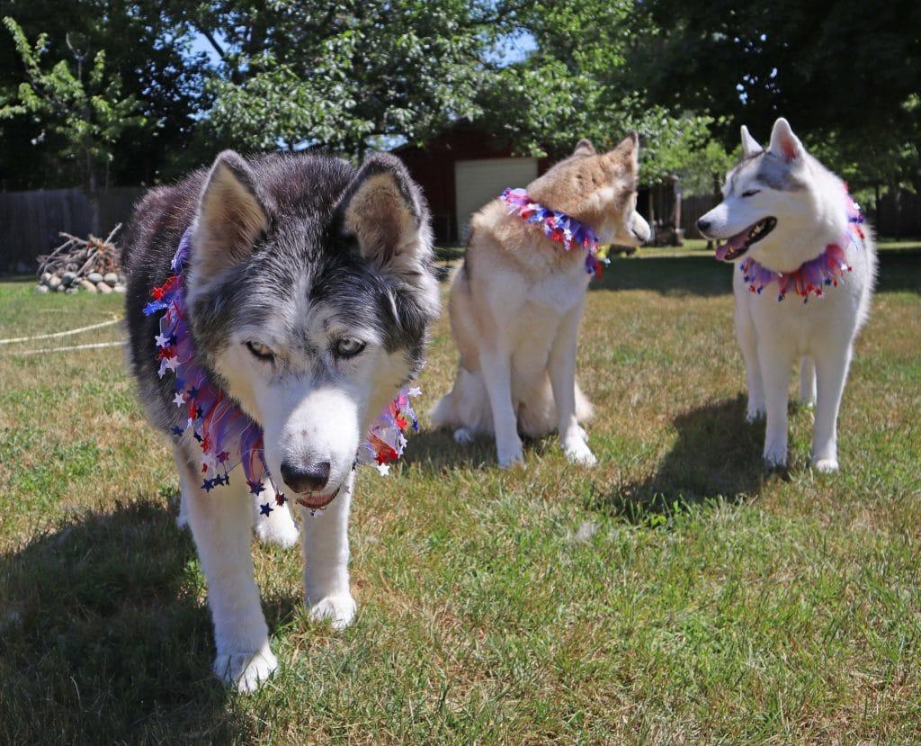 DIY Gummy Stars for Dogs