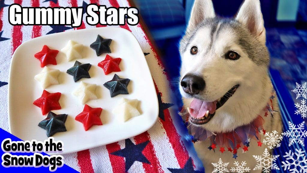DIY Gummy Dog Treats for 4th of july