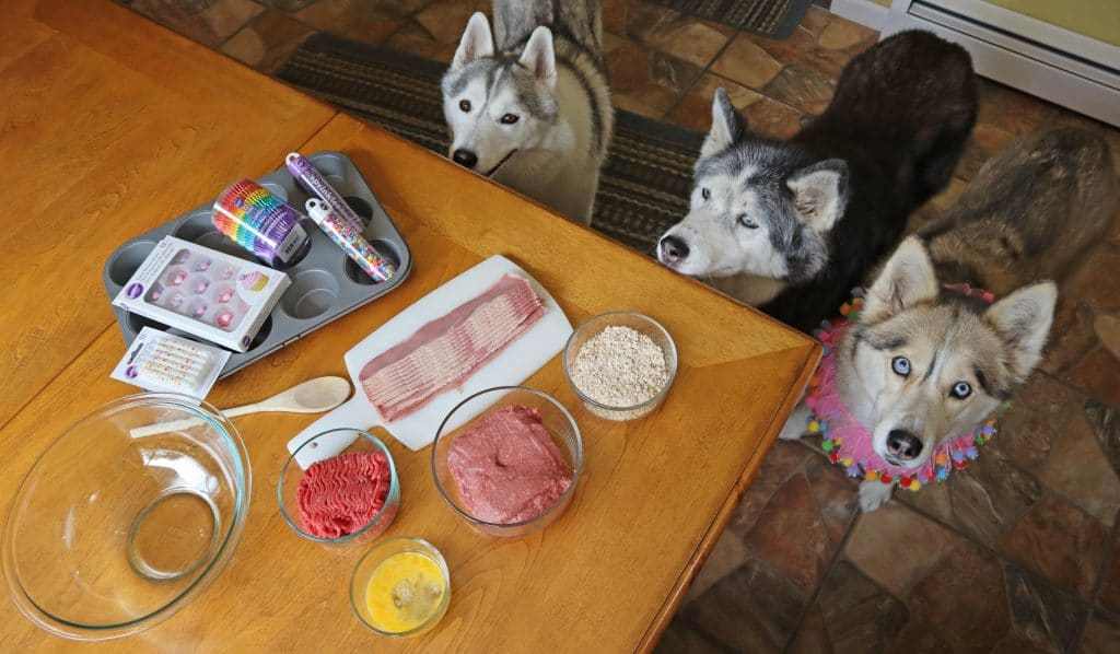 Bison Birthday Cupcakes for Dogs