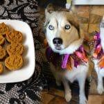 Pumpkin Spice Muffins for Dogs | Halloween Dog Treats