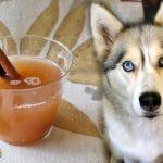 Apple Cider For Dogs | Homemade Dog Recipes