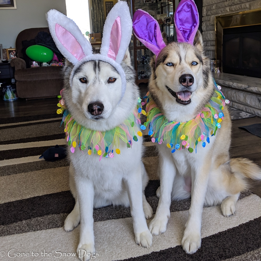 Easter Eggs for Dogs